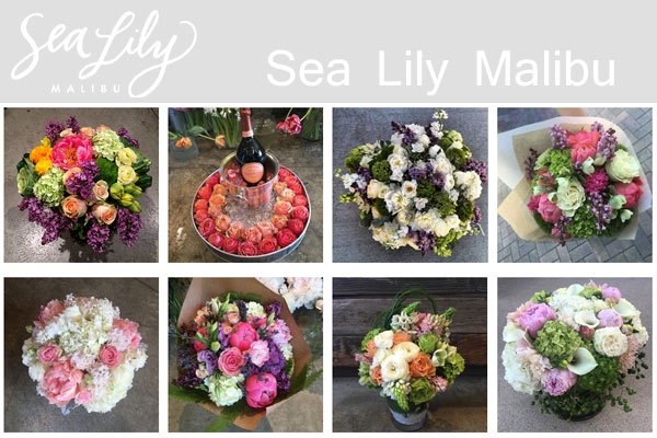 Sea Lily Malibu