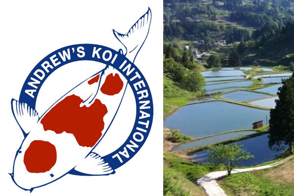 Andrews Koi International