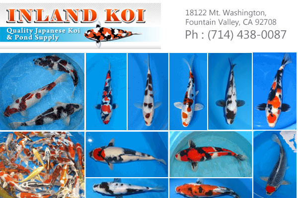 Inland Koi Fountain Valley CA