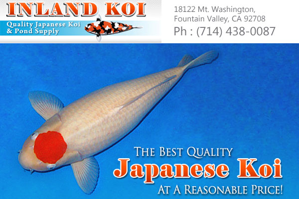 Inland Koi Fountain Valley