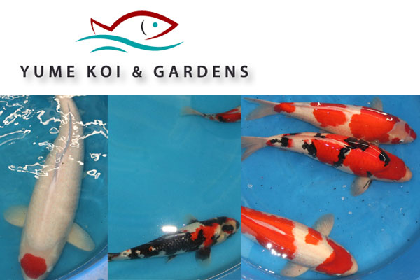 Koi Goldfish Pond Supplies California