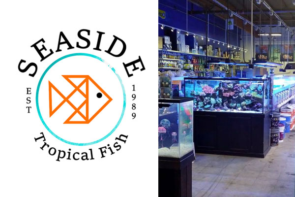 Seaside Tropical Fish